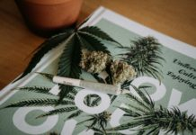 Cannabis JointTag: Shelby Ireland or @canna.beee if you decide to use!