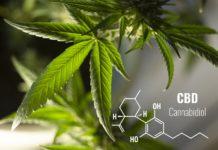 leaves, cannabis, plant